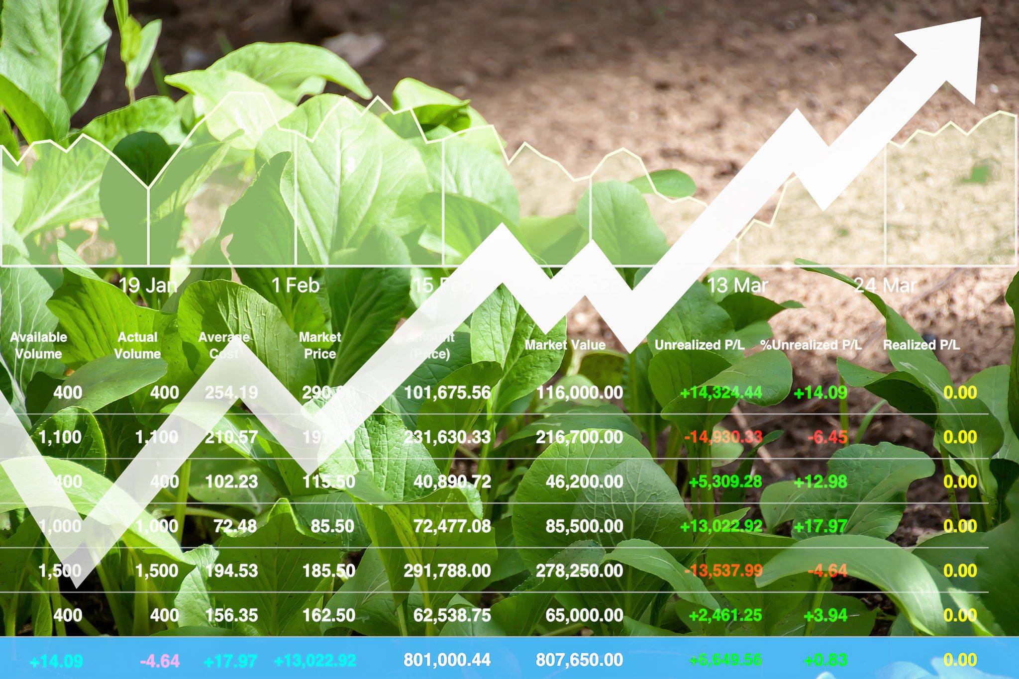 agricultural outlook market numbers