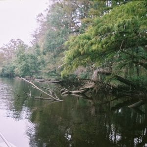 Figure 22. Fish attractors serve as habitat for aquatic insects and forage.