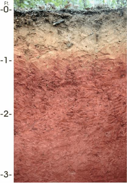Alabama soil profile
