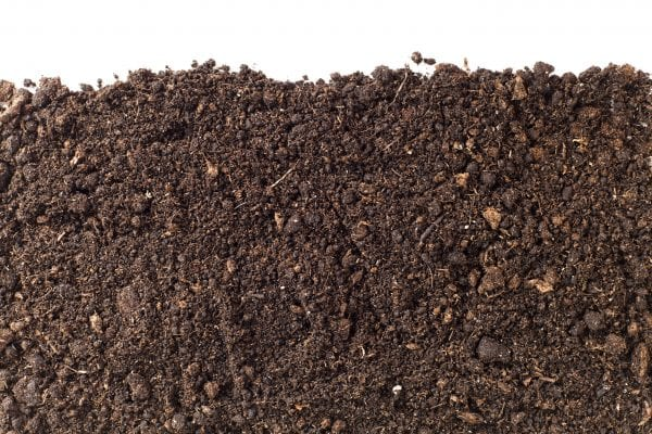 A close-up of soil against a white background