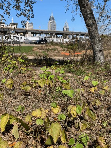 overwintering soybean rust