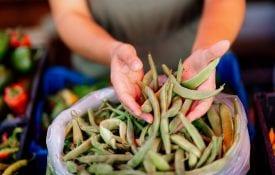 hands holding fresh beans