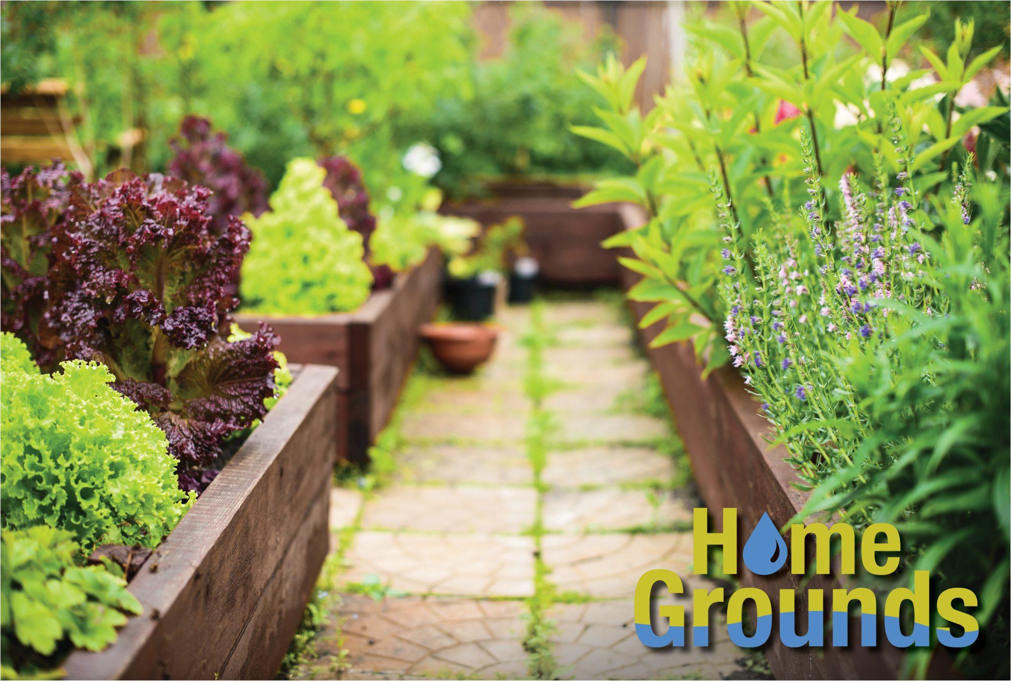 Raised-bed vegetable garden