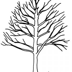 Remove V-crotches (narrow-angled) and crossing branches, which create weakness in a tree.