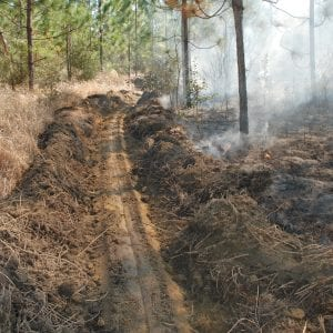 Figure 6. What looks like white ropes in this fire line cut through are cogongrass rhizomes.