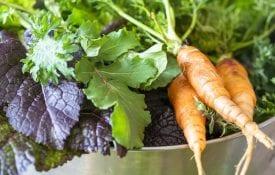 Fresh vegetables from a backyard garden.