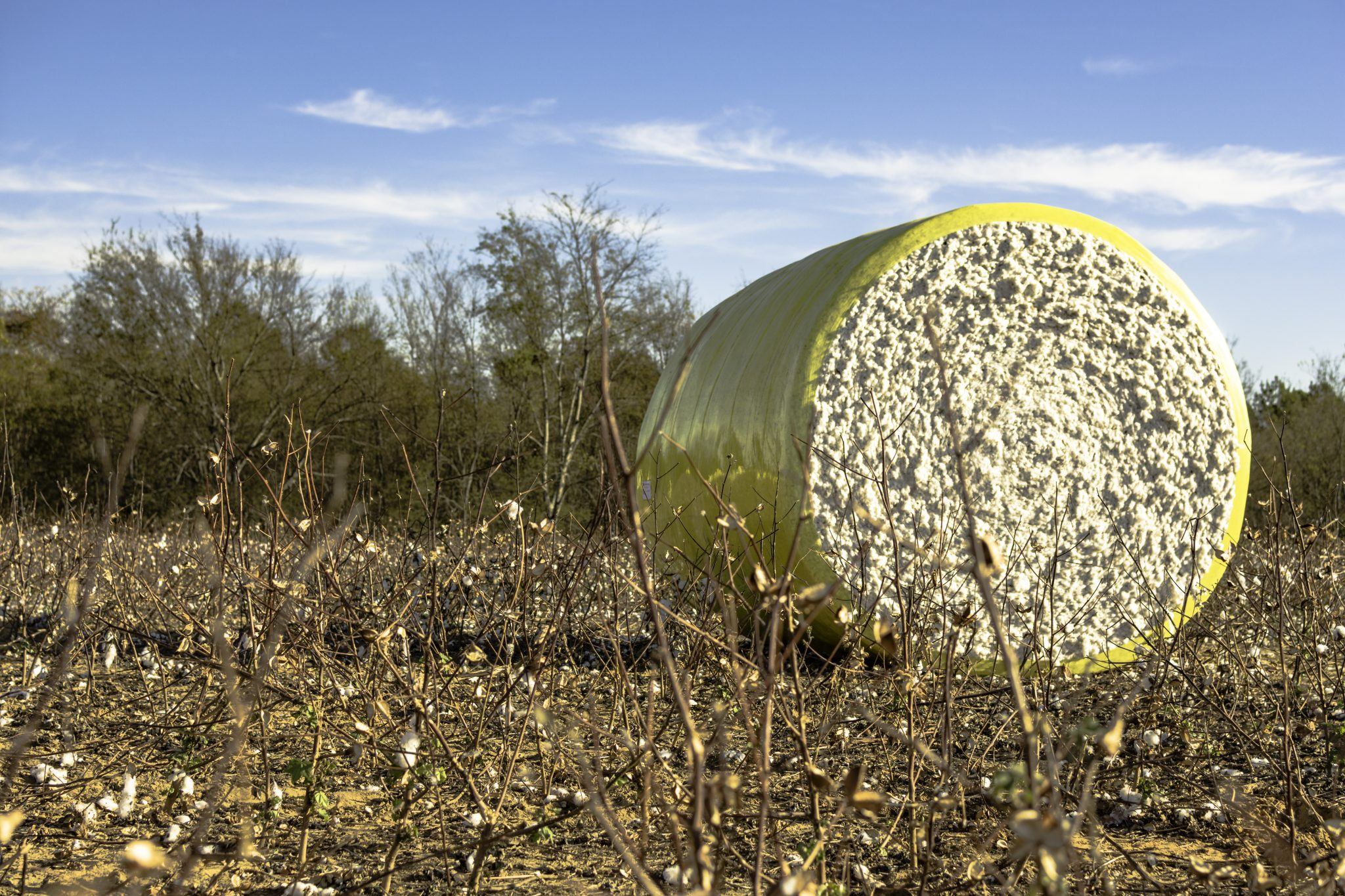 Harvested cotton field with a wrapped cotton bale to the right