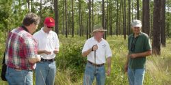 Men standing in a field with pine trees.