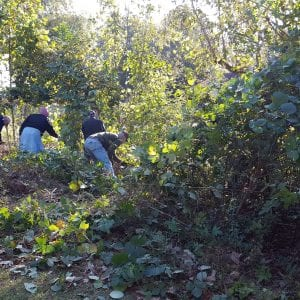 People clearing plant overgrowth