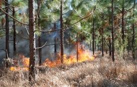 cogongrass fires