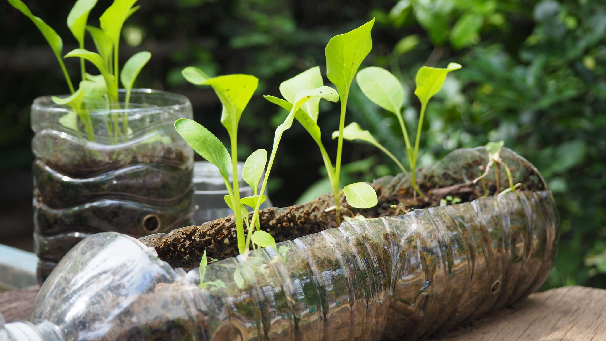 Recycling materials used for seed starter
