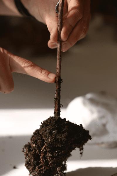 soil depth