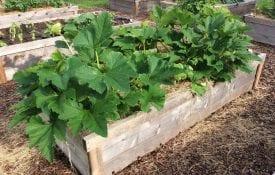 A raised bed garden