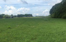 Bermudagrass hayfield in Cherokee County Alabama