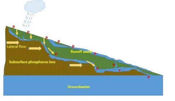 Figure 3: Subsurface loss of phosphoru