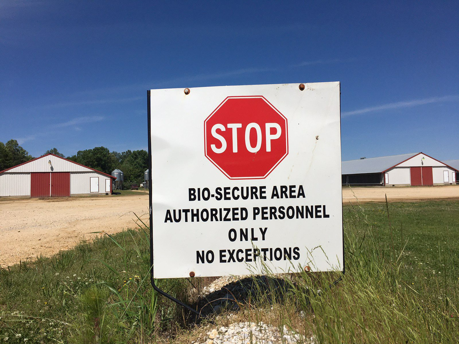 Chicken house biosecurity sign