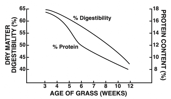 Figure 1. Quality of Coastal bermudagrass as influenced by age of accumulated growth since previous harvest.