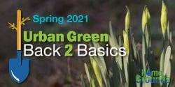 Back 2 Basics logo over Spring budding daffodils