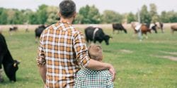 Young father and son with cows in the background.