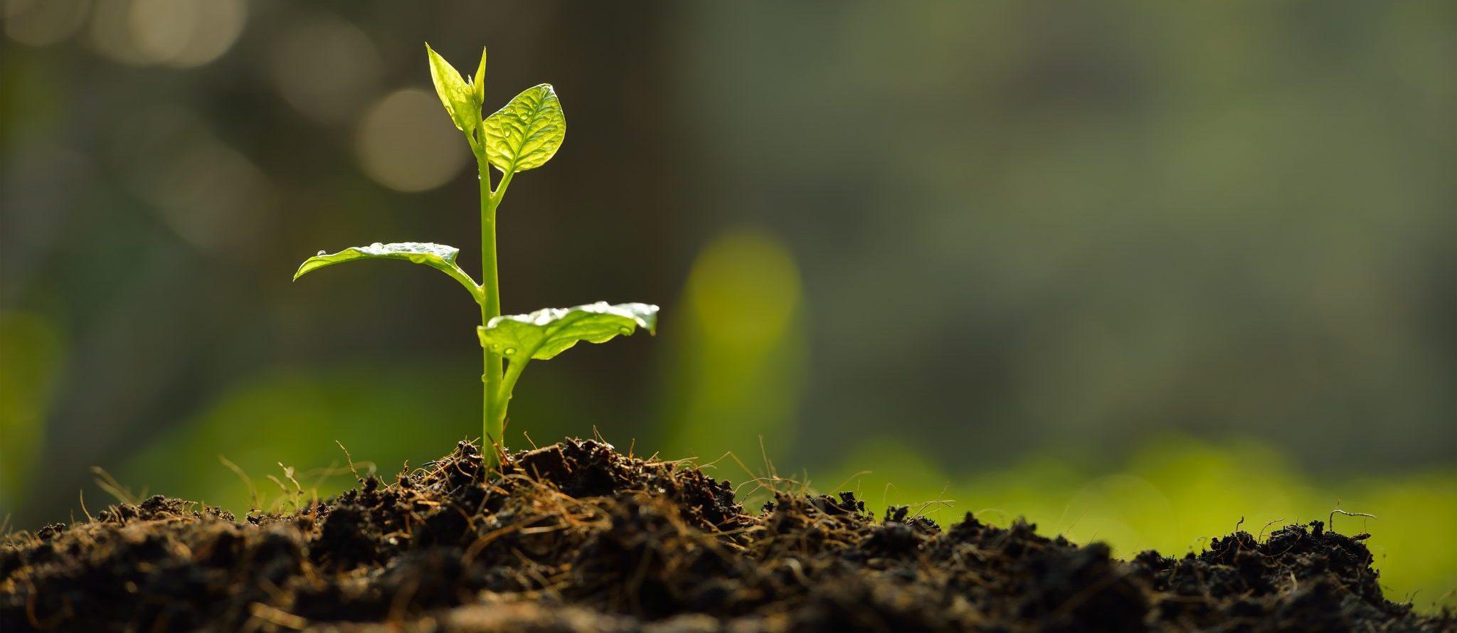 Garden plant growing in the soil
