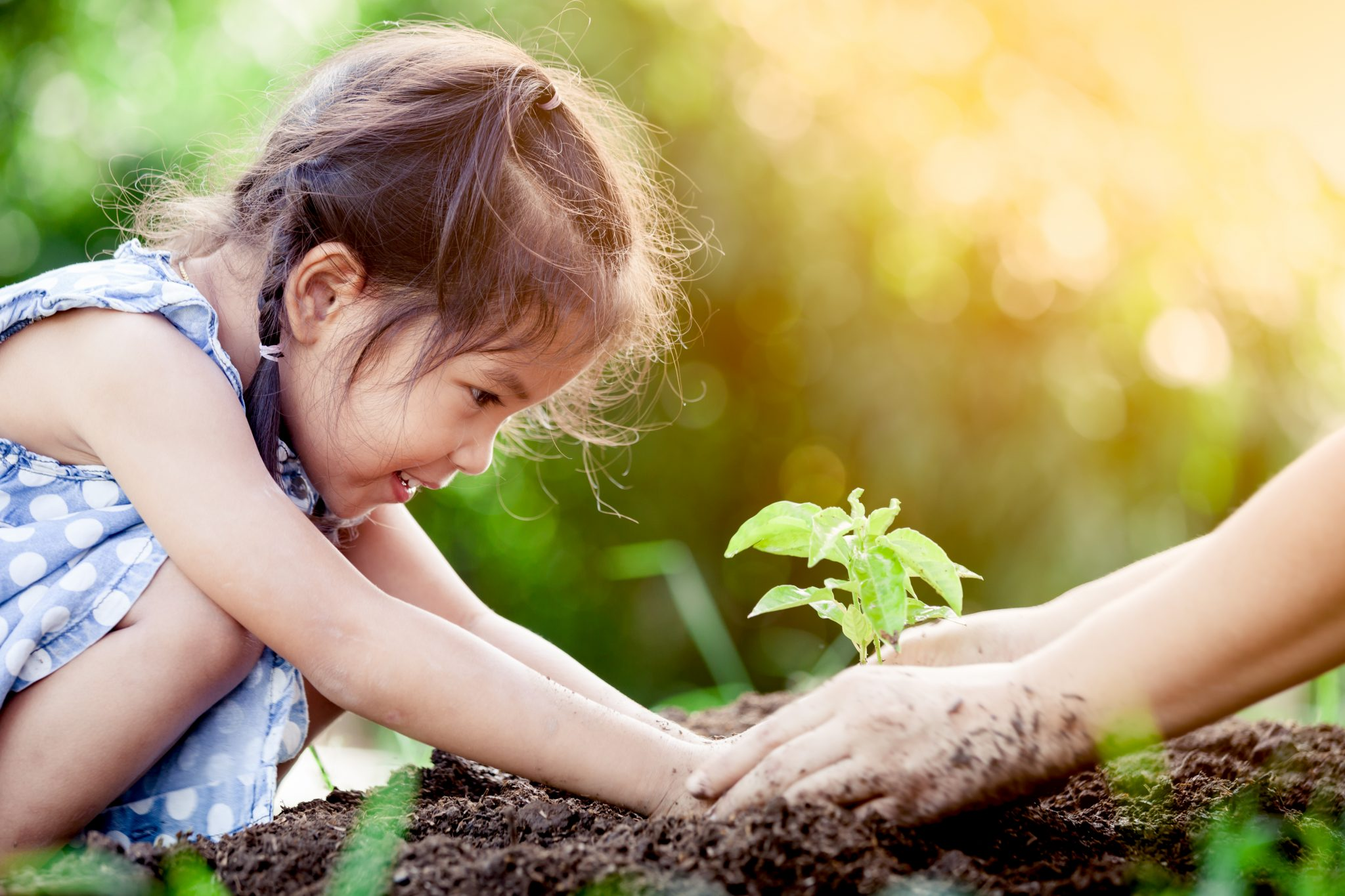 Generation of a new home gardener