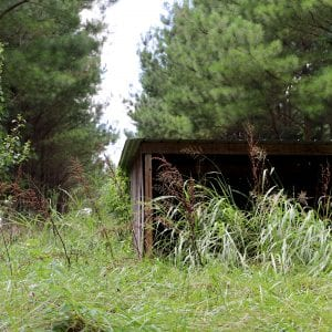 heavy underbrush obscures goat shelter building