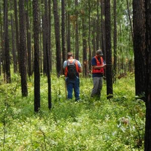 Figure 1. A timber inventory is an important component of every forest management plan (photo by Becky Barlow).