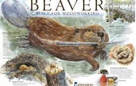 Beaver Built for Woodworking