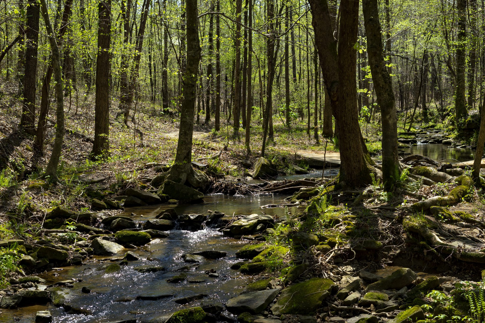 The cool water of Cane Creek flows through the lush forest of the Nature Preserve located in Northwest Alabama. The preserve is a great place to come and lose yourself in the beauty of nature.