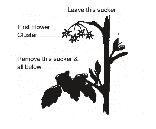 Pruning diagram