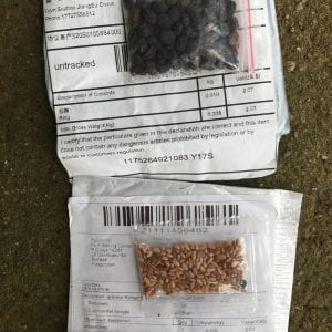 Seed packages from China