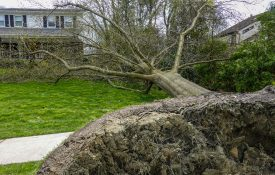 Uprooted tree in a neighborhood