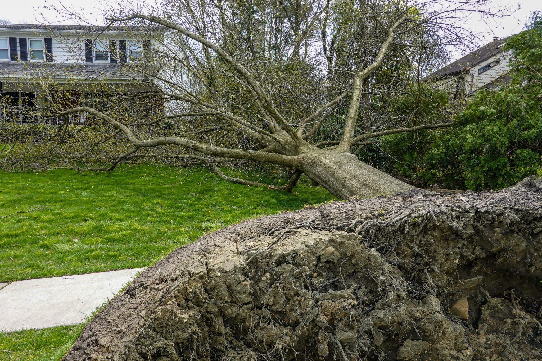 Uprooted tree in a neighborhood