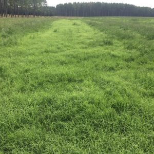 bermudagrass hayfield