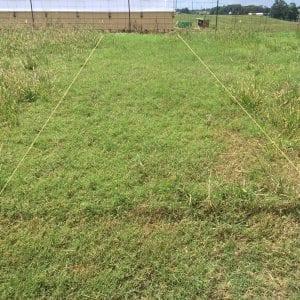 Rezilon herbicide application in bermudagrass