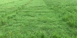 Rezilon herbicide in bermudagrass