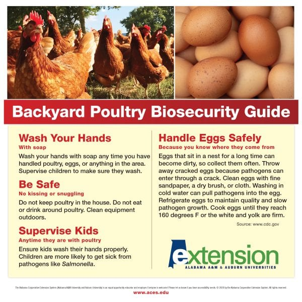 Backyard Poultry Biosecurity Guide