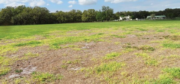 Figure 6. Lack of lime along with potassium and phosphorus input associated with bahiagrass pasture decline in Florida. Photo courtesy of Lynn E. Sollenberger.
