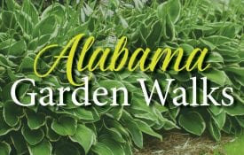 Close-up of Hosta plants with text: Alabama Garden Walks