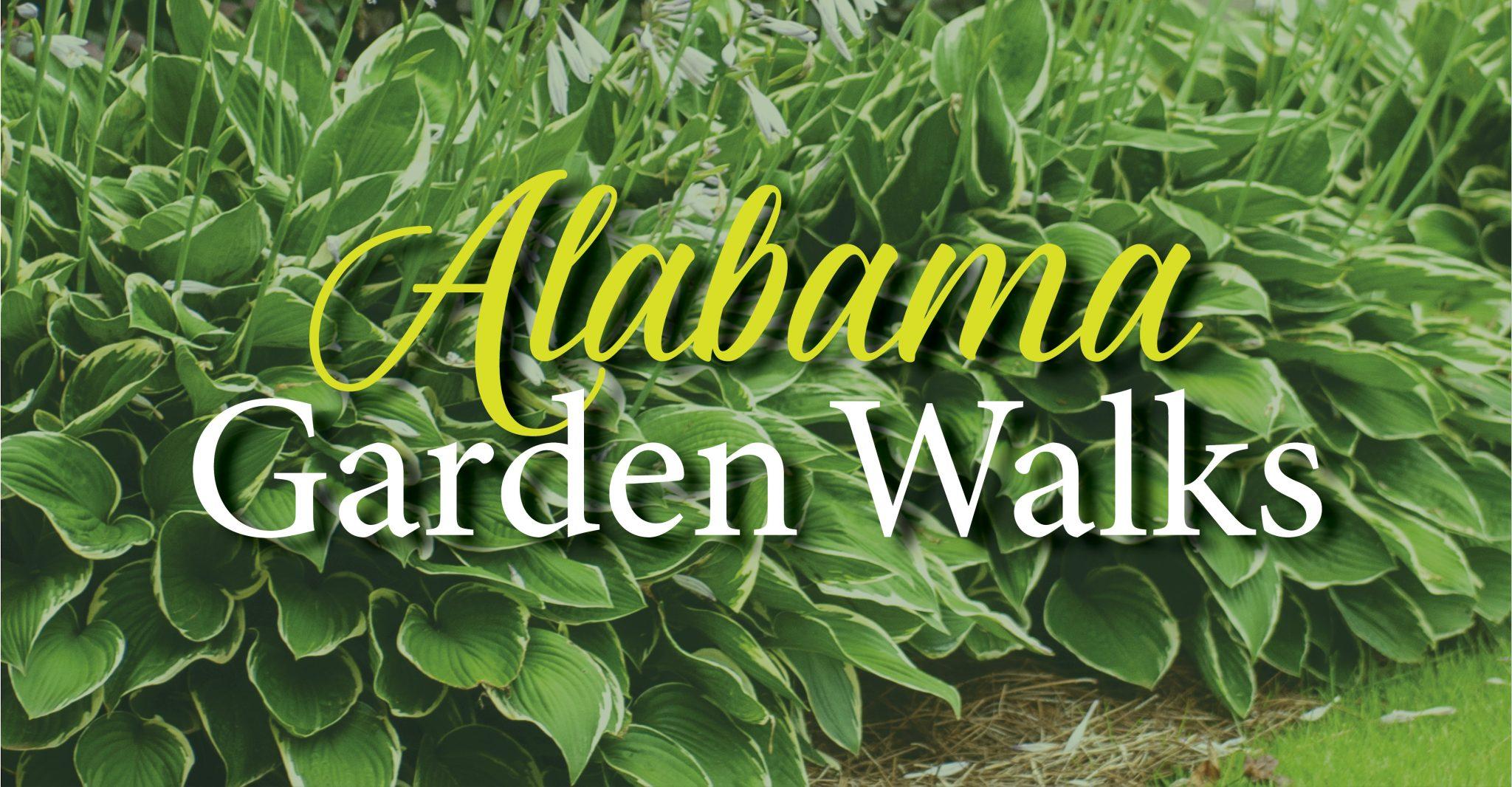Close-up of Hosta plants with text: Alabama Garden Walks