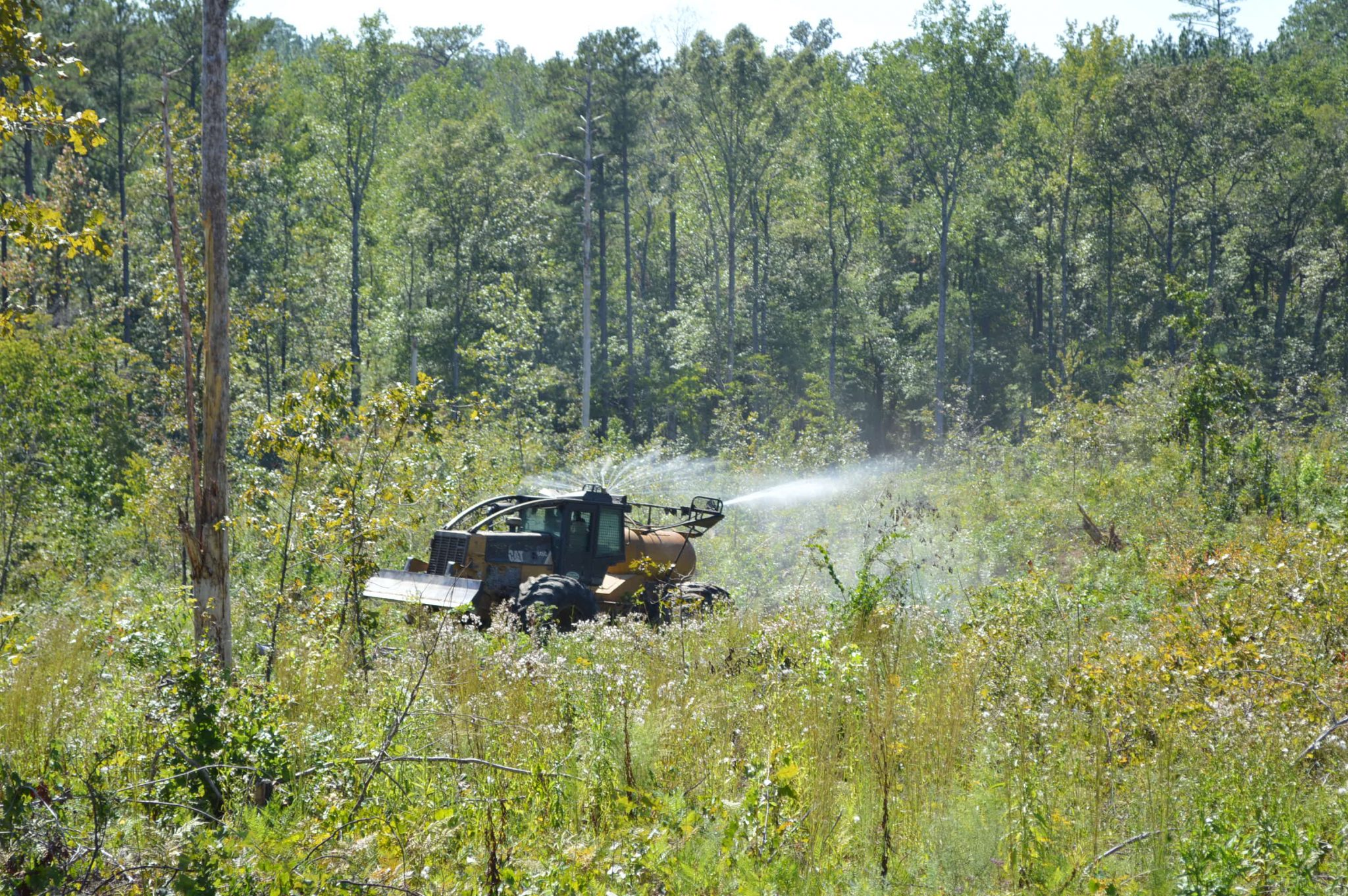 Spraying herbicide in a timber cut area