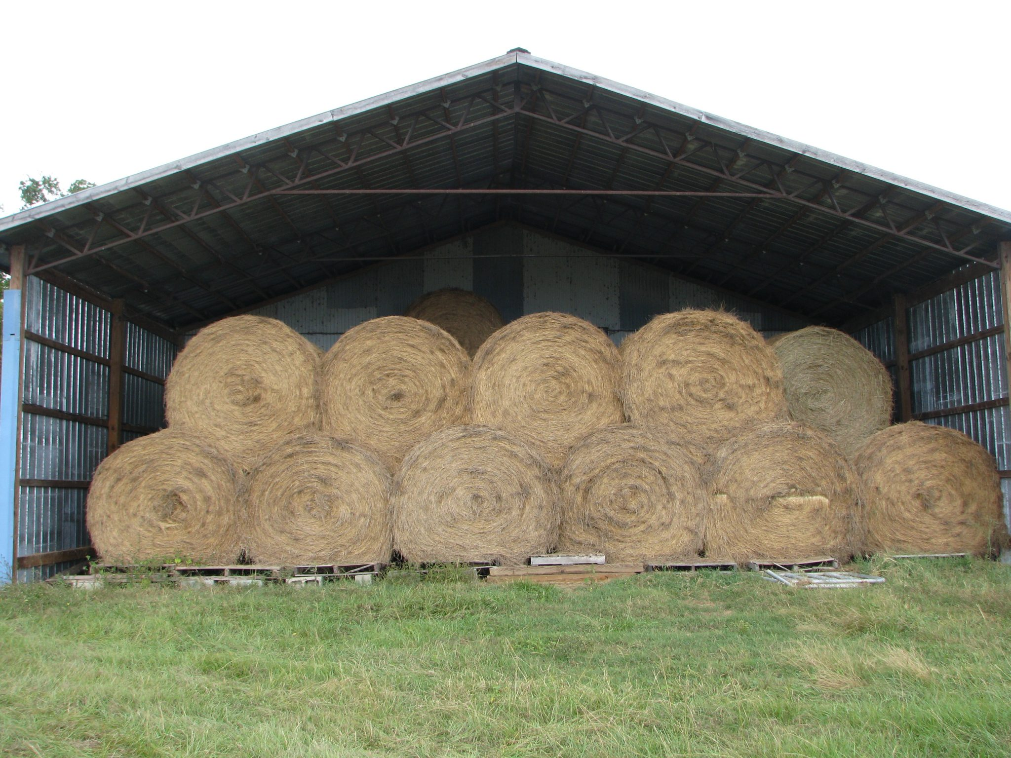 Ideally, hay should be stored off the ground, under a roof, and off limits to animals.