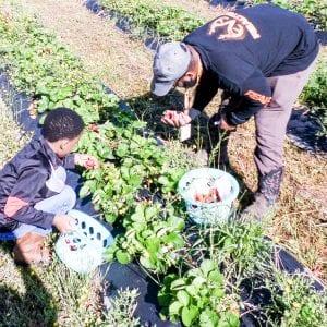 School garden harvest