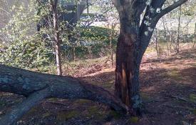 Damaged tree