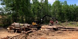Timber Cutting for Sale