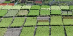 Aerial view of a nursery