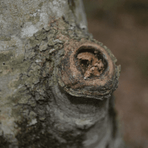 A stub left from pruning a tree
