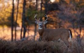 deer processing videos