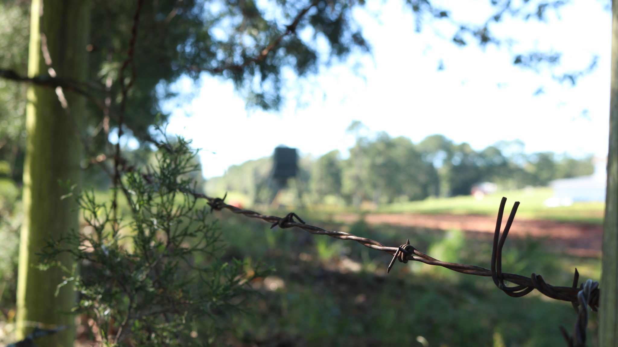 Barbed wire fence on a property line.