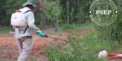 Image shows a man spraying weeds